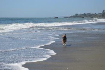 beach shasta4